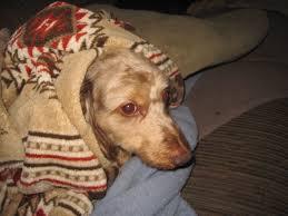 CBD for dog anxiety